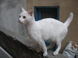 Miss Pwiss, Istanbul 2006