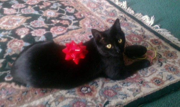 Black Bean with red bow