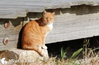 alleycatallies_boardwalkcatsproject-2