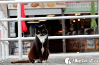 alleycatallies_boardwalkcatsproject-4