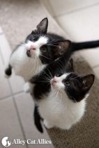 alleycatallies_kittens_3