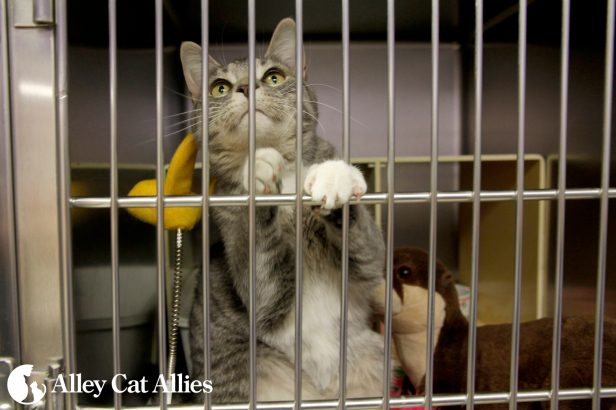 alleycatallies_sheltercat_1