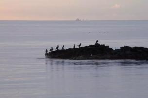 Birds on the seashore