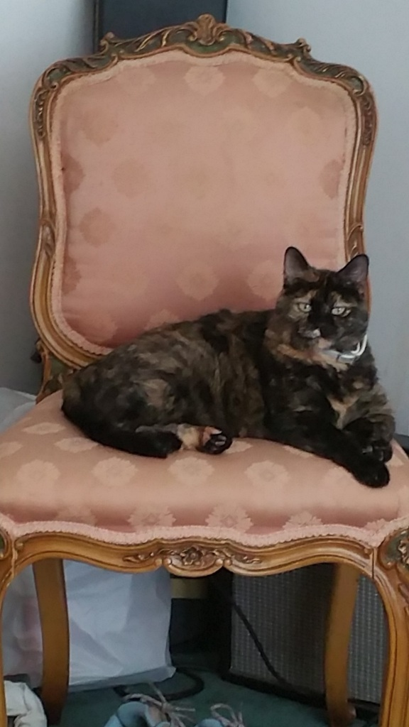 Ophelia on the pink chair