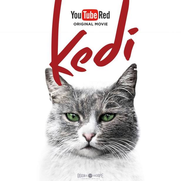 kedi film photo 4