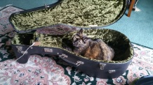 Ophelia in lute case 2018