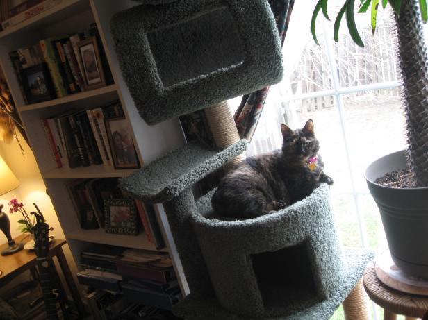 Ophelia Feb 28, 2018 in cat tree 2