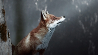 fox from anne with an E closeup from art of the title