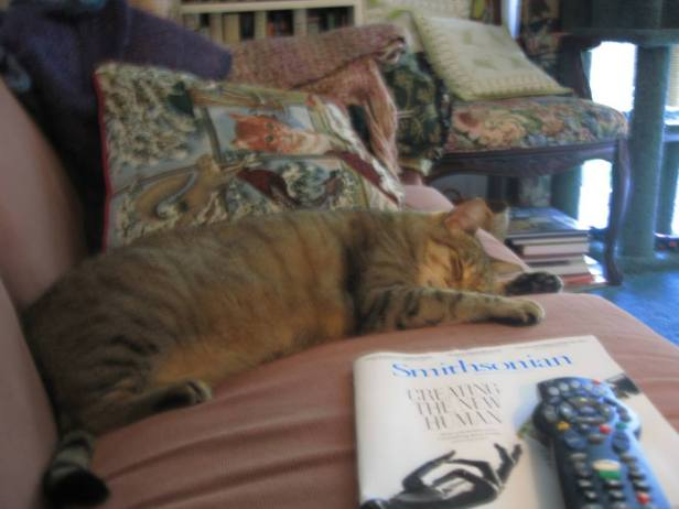 Sissy sleeping (2016_05_01 17_16_42 UTC)