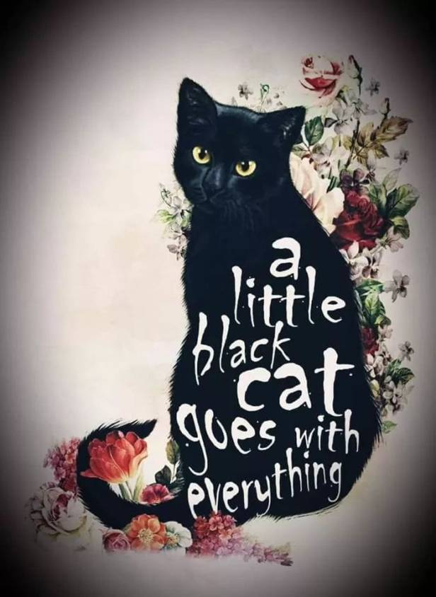 a little black cat goes with everything